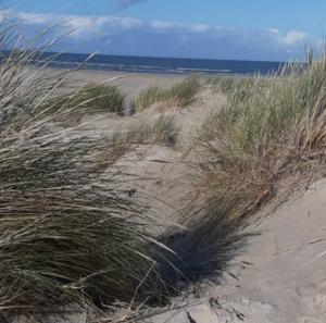 Dünengrass mit Sand und Meer